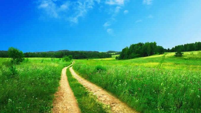 feld-weg-wiese-footpath