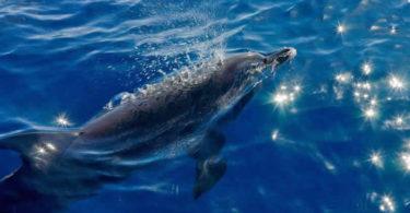 sonja-hagen-delphin-dom-dolphin-healing