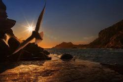 see-moewe-licht-wasser-mystik-sea