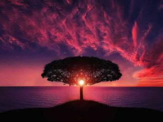 Baum-wasser-violett-abend-amazing