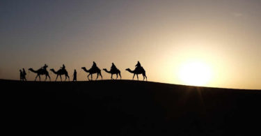 Kamele-Wueste-Abend-camels