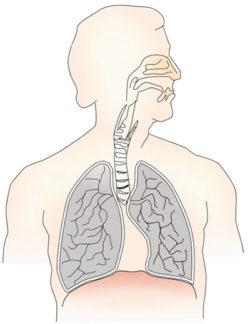 zeichnung-lunge-mensch