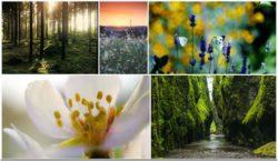 collage-natur-blumen-wald