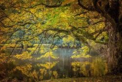 Herbst-baum-blaetter-see-autumn