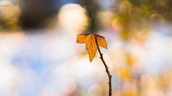 blatt-warm-leaf