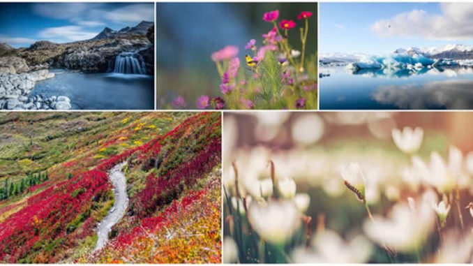 collage-natur-blumen-wasser