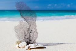 Aufwachen strand sand blatt beach