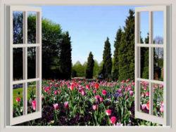 fenster-fruehling-tulpen-window