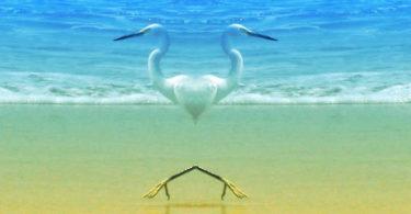 Voegel-meer-herz-beach