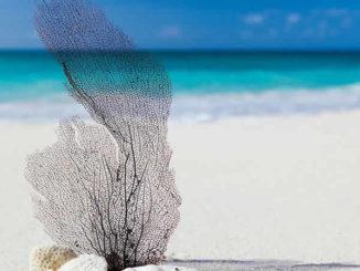 strand-sand-blatt-beach
