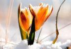 gut-saunstorf-Winterretreat-Bild-Cover-Blume