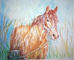carl-franz-Saltmarshe-Spirit-Horse