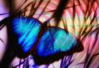 blauer-schmetterling-butterfly-908162