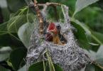junger-vogel-bird