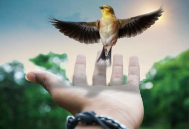 vogel-hand-creative