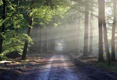 wald-weg-nebel-road