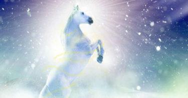 weisses-pferd-winter