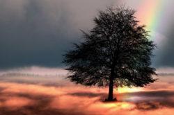 An den Zweifler regenbogen tree
