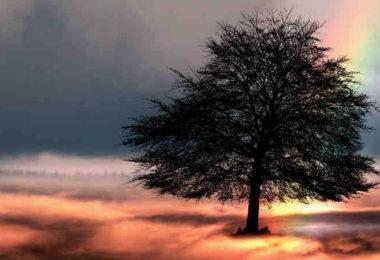 regenbogen-tree