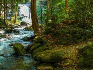 wilder-fluss-river-landscape
