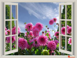 blume-fenster-a-beautiful-day
