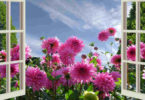 blumen-fenster-a-beautiful-day
