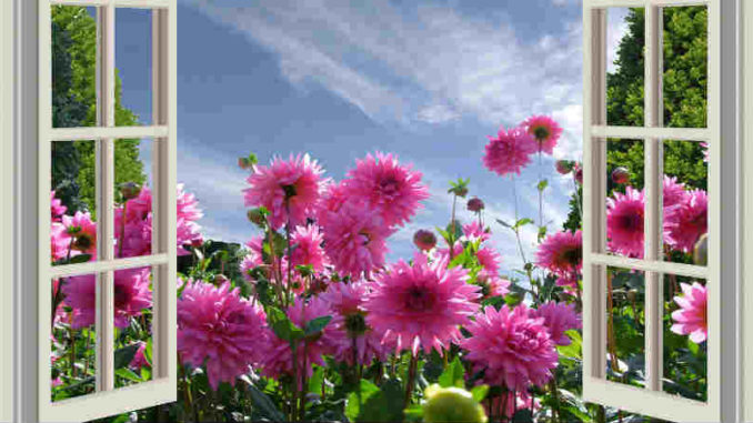 blumen-fenster-a-beautiful-day