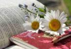 buch-blumen-daisies