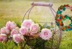 editha-wuest-6-rose