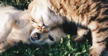hund-katze-friends