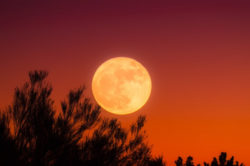 vollmond-blutmond-harvest-moon