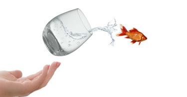 hand-wasser-glas-fisch-life