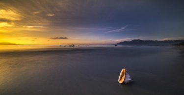 muschel-the-beach