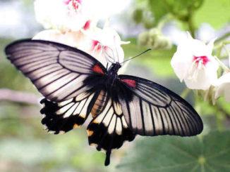 schmetterling-bloom