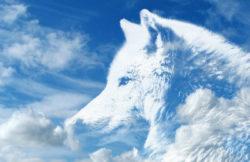 Krafttiere-blauer-himmel-weisser-wolf