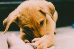 trauriger-junger-hund-augen-gucken-hand
