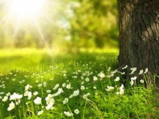 Baum Blumen Wiese Baumstamam Sonnenlicht spring