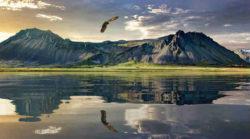klinke-fliegender Adler-new-zealand