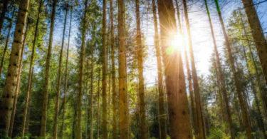 spirituelle-oekologie-wald-licht-forest