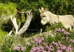 bleser-seelenreise-mallorca-2019-donkey