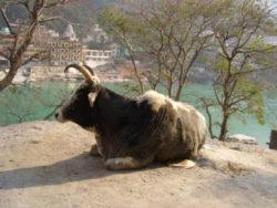 Ashram Indien