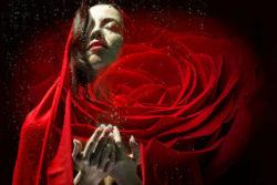 vergebung-freiheit-rote-rose-woman