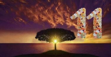 numerologie-11-baum-sonnenuntergang-tree