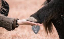 tierkommunikation-tiere-verstehen-mit-tieren-sprechen-huf