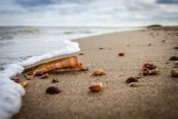 strand-muscheln-nordsee-beach-bleser