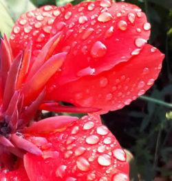 Überdosis Liebe Blume