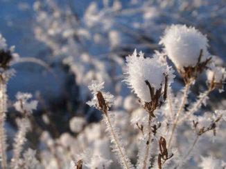 pfad-der-weisen-alten-seelenpfad-weibliche-weg-snow