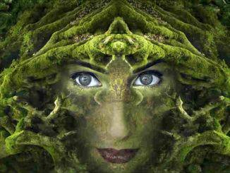 verwurzeltes-Leben-innere-Staerke-fantasy