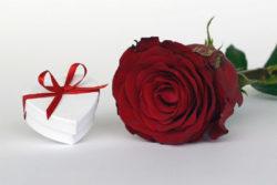 mit-liebe-schenken-achtsame-weihnachten-rose