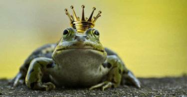 tiere-himmlische-gluecksbringer-frog